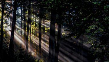 Sfeerbeeld bij het dialoogblog 'zo ben ik nu eenmaal'. Donker bos, zijaanzicht, helder zonlicht in witte stralen invallend vanuit linksboven.