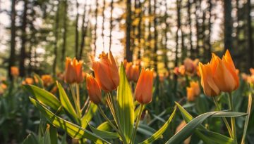 Sfeerbeeld bij dialoogblog over het wegwuiven van waardering. De foto toont een veld met oranje tulpen, op de achtergrond bomen. Zonlicht van achter de bomen wordt in een concentratie opgevangen tussen de blaadjes van een tulp op de voorgrond.