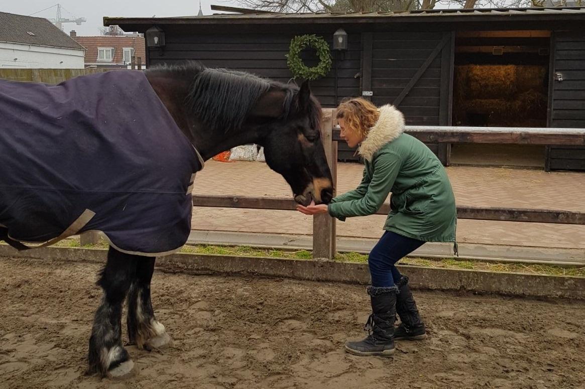 Beeld van het paard Ed en Ilona Kuis.