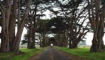 Sfeerbeeld bij review paardencoaching. Vergezicht over lege smalle asfaltweg, weilanden en bomen aan weerszijden.