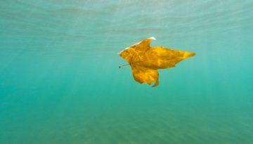 Sfeerbeeld bij blog over de vitaliteit van de coach. Een geelbruin verdord herfstblad dat sierlijk en licht onder zeegroen water drijft.