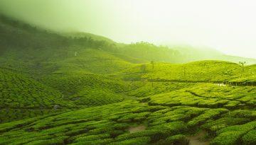 Sfeerbeeld bij blog 6 van anonieme cliënt Michal. Groene velden gehuld in mist.