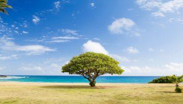 Sfeerbeeld bij blog 7 over anonieme cliënt Michal. Een zonnig strand, blauwe lucht met wolkjes, een boom trots in het midden, een breed groen bladerdek.