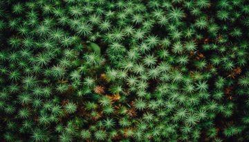 Sfeerbeeld bij blog Confetti. Bovenaanzicht van groene beplanting met stervormige knopjes.