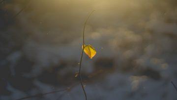 Sfeerbeeld bij blog 2 van cliënt Jim. Een dor takje met 1 door de zon opgelicht geel blaadje, een wazige antraciete achtergrond van natuur, met de zon van boven.