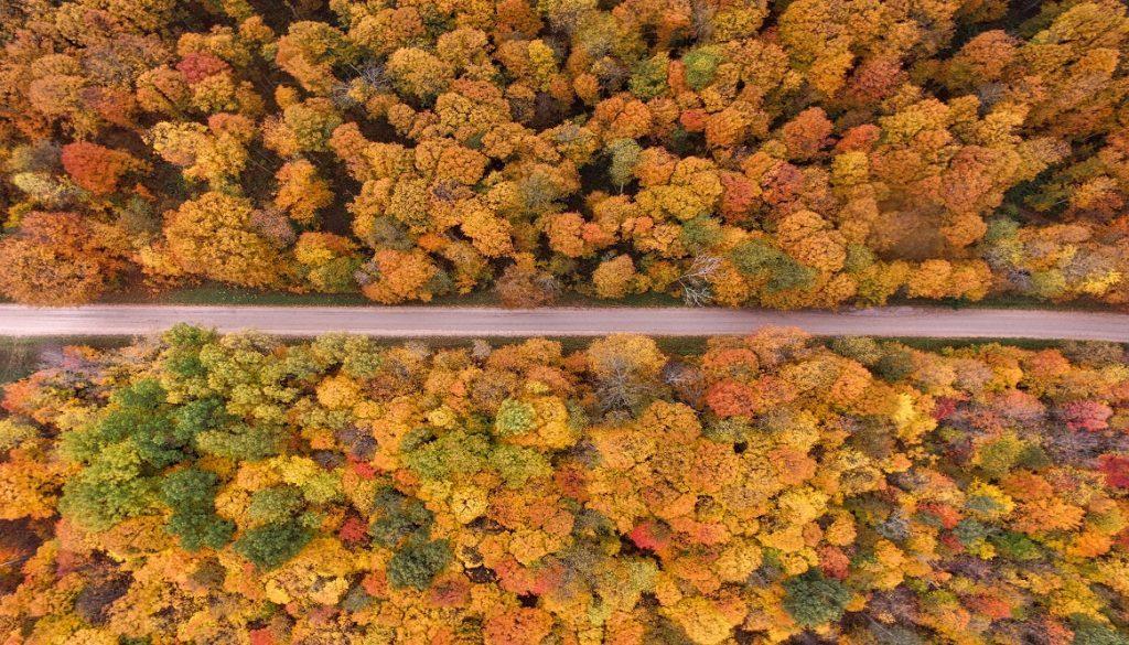 Sfeerbeeld bij blog 1 over anonieme cliënt Woud. Bovenaanzicht van een bos in geel, oranje en groen, horizontaal doorkliefd door een smalle asfaltweg.