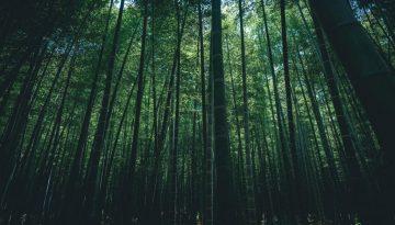 Sfeerbeeld bij blog 2 van anonieme cliënte Flora. Onderaanzicht van een groen bamboebos.